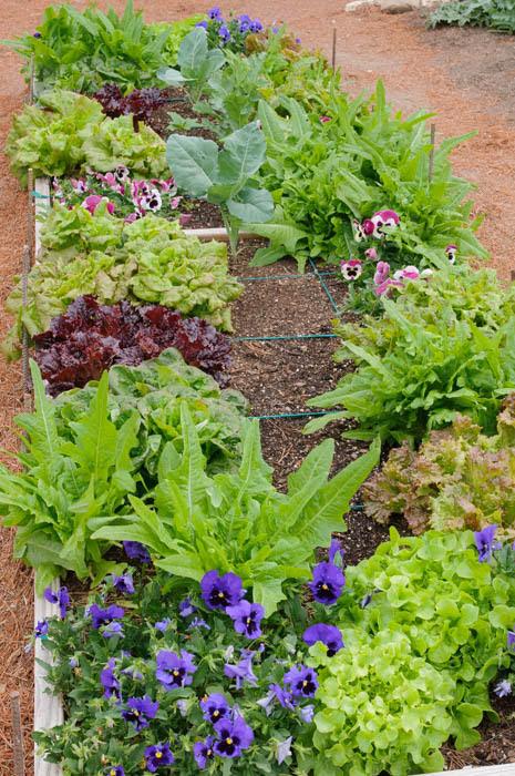 Artichoke, endive, lettuce