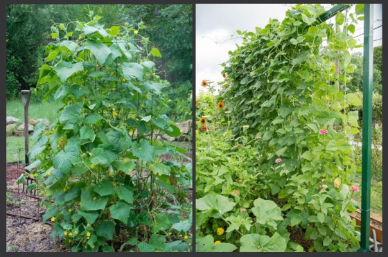 growing-vertically