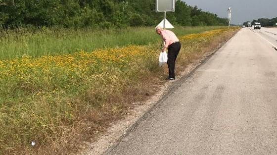 harvesting-wildflowers-1