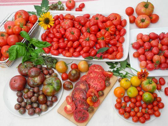 2017-tomato-harvest