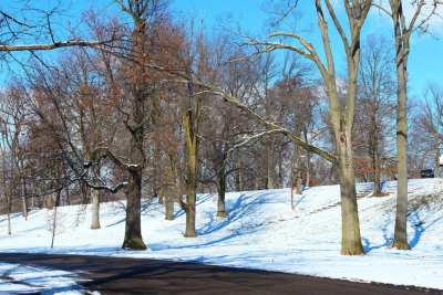 Winter Snow and Trees - Sledding Hill