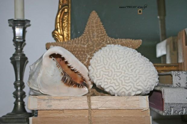 Seashell decor transition1