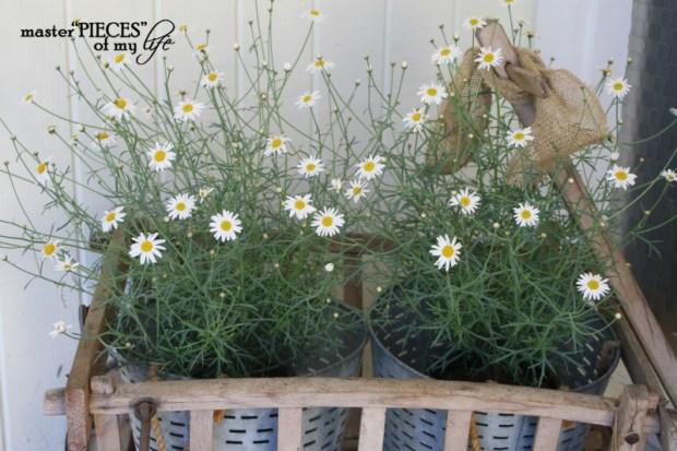Container gardening 2020 1