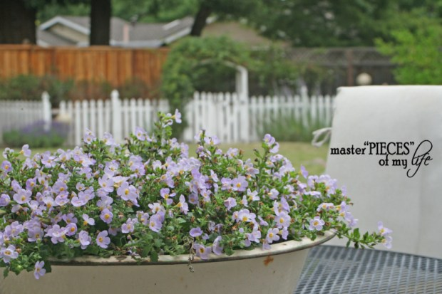 Container gardening 2020 5