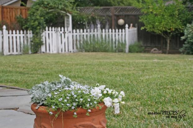Container gardening 2020 9