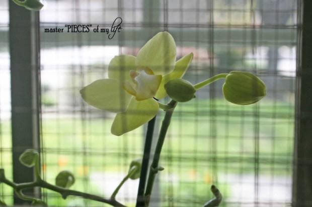 Orchids 101-2