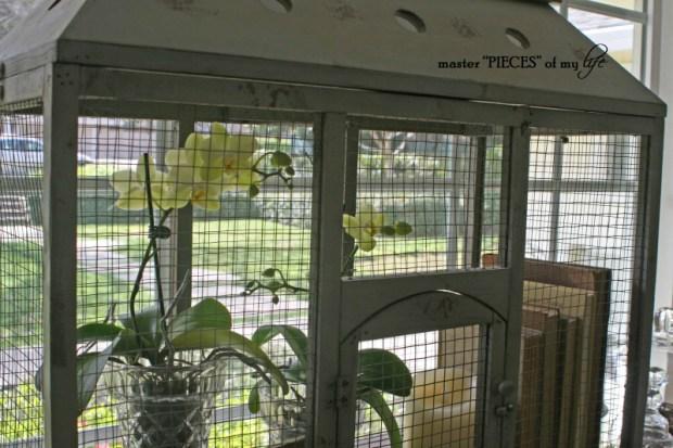 Orchids 101-8