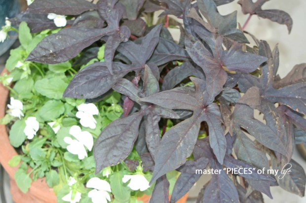 Fall container gardening5