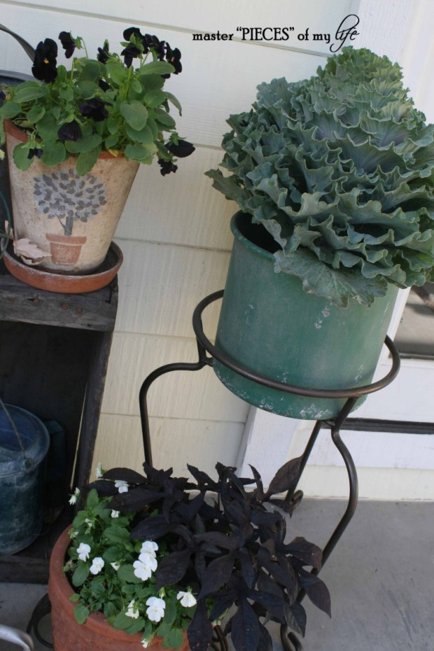 Fall container gardening6
