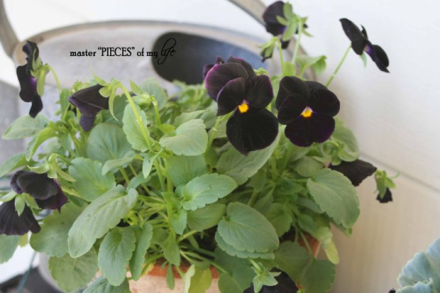 Fall container gardening7