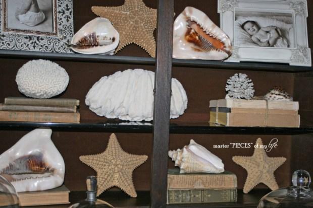 Secretary seashells 2