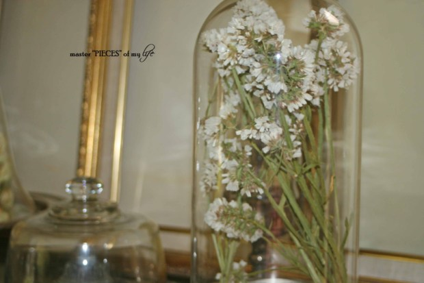 Cloches & dried flowers5