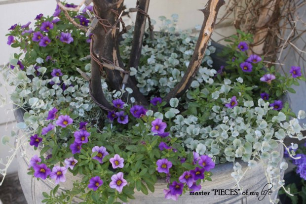 Gray container gardening6