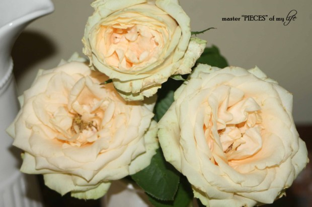 Faded blooms9