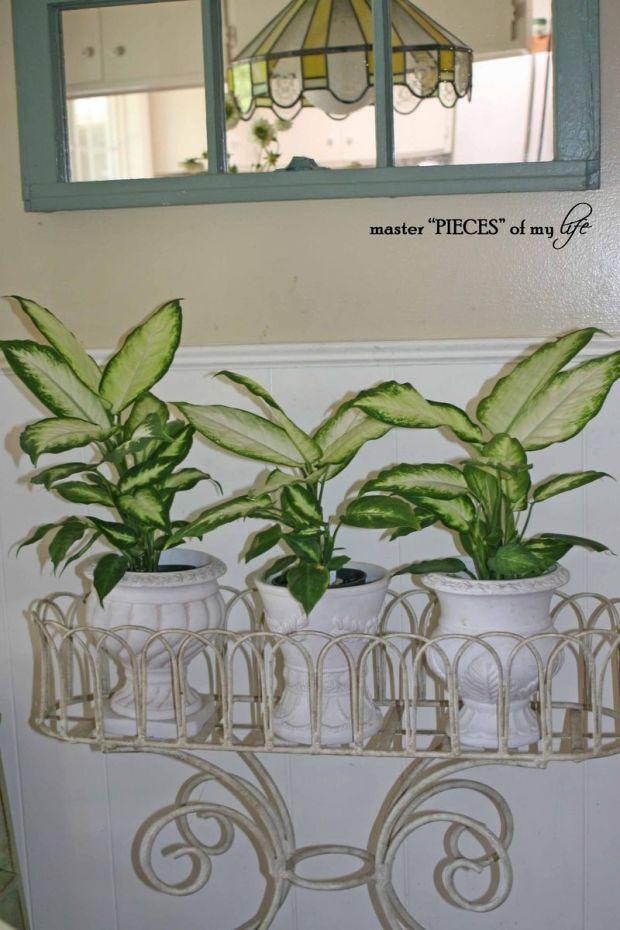 Indoor plants 5