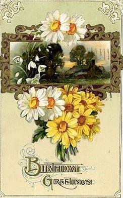 Birthday greetings daisies