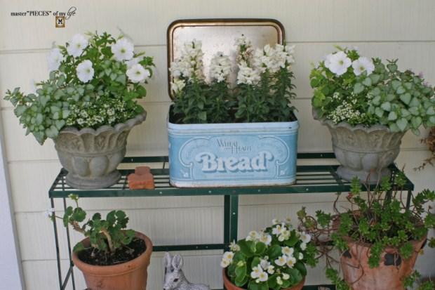 Container gardening ideas & inspo3
