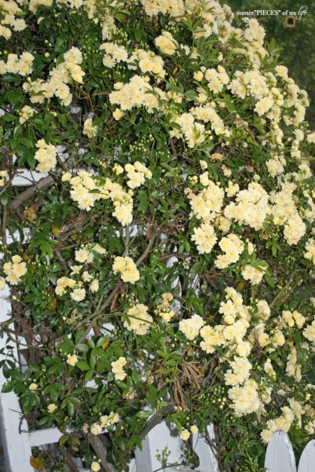 7 happenings spring garden2