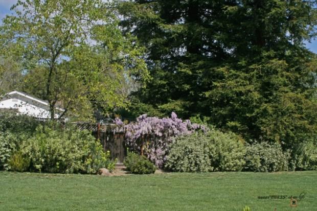 7 happenings spring garden6