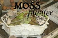 Moss planter