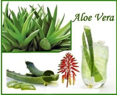 1-aloe-sws