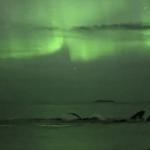 ¡Qué espectáculo! No te pierdas el baile de las ballenas bajo la aurora boreal en Noruega