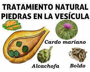 piedras-vesicula-plantas