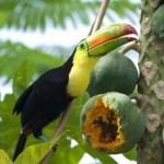 Costa Rica quiere la biodiversidad libre