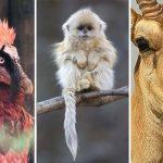 25 animales extraños al borde de la extinción