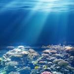 La lenta 'agonía' de la vida en los océanos