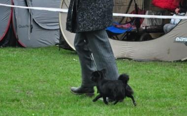 I'M BLACK PEARL Master York - Krajowa Wystawa Psów Zabrze