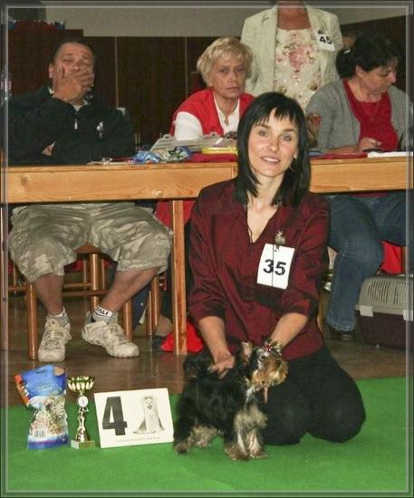 GRACJA FOR BOHEMIA PLATINA Master York Specjalna (klubowa) Wystawa Yorkshire Terrierów -Żeliv Czechy