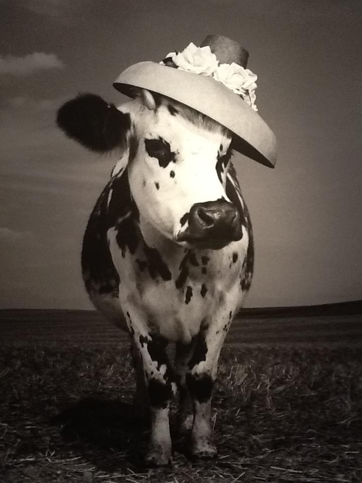 One Haute Holstein Oh La vache