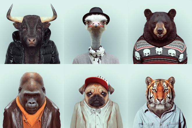 Animal Bedroom Wallpaper Zoo Portraits By Yago Partal