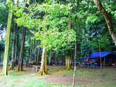 Warung in the forest