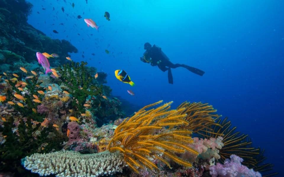 Scuba Diving at Matangi Private Island Resort Fiji