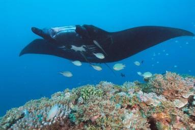 Matava Reefs