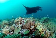 Manta Madness 10 Day Dive Package at Matava, Kadavu, Fiji