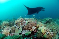 Manta Madness 10 Day Dive Package at Matava, Kadavu, Fiji
