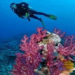 Scuba Dive Kadavu Package