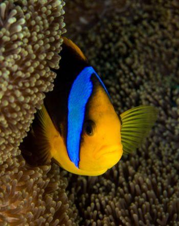 Matava Anenomie Fish 1