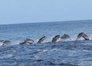 Awesome Dolphins Adventures at Matava, Fiji