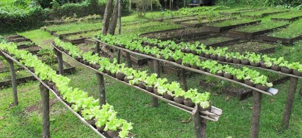 organic farm - matava