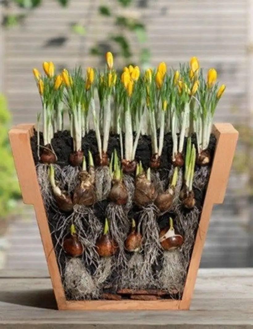 Creative garden potting ideas 18