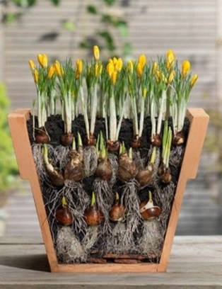 Creative garden potting ideas 18