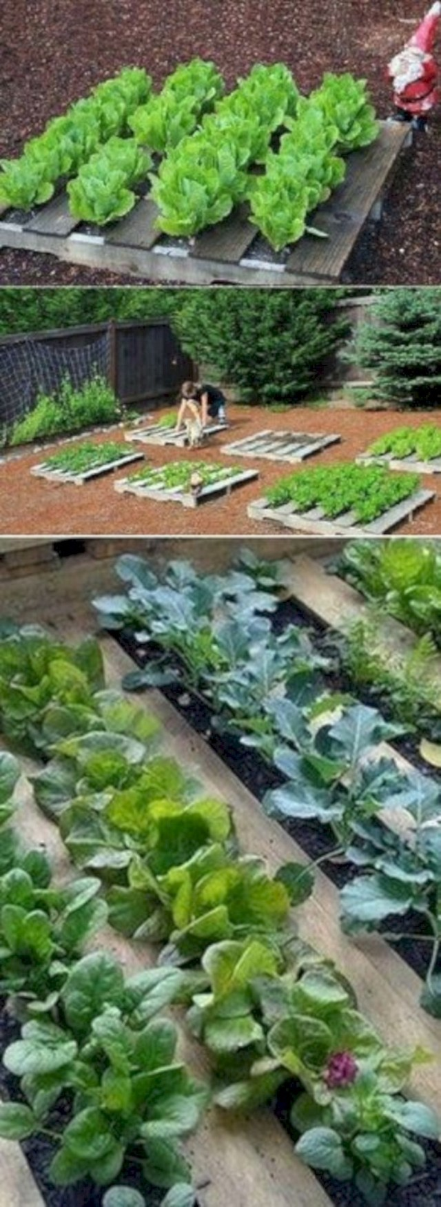 Wooden pallets and little vegetables garden