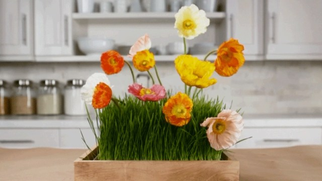 1. flower and grass in the kitchen
