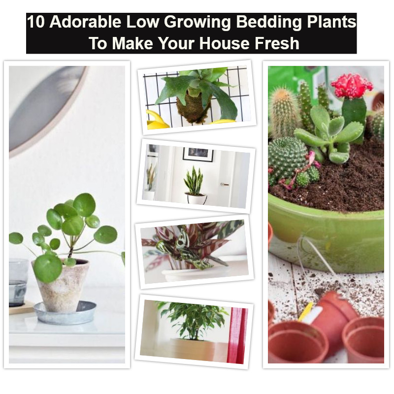 10 adorable low growing bedding plants to make your house fresh