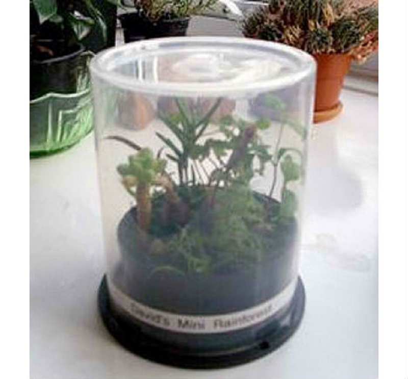 Cd-spindle-case-greenhouse