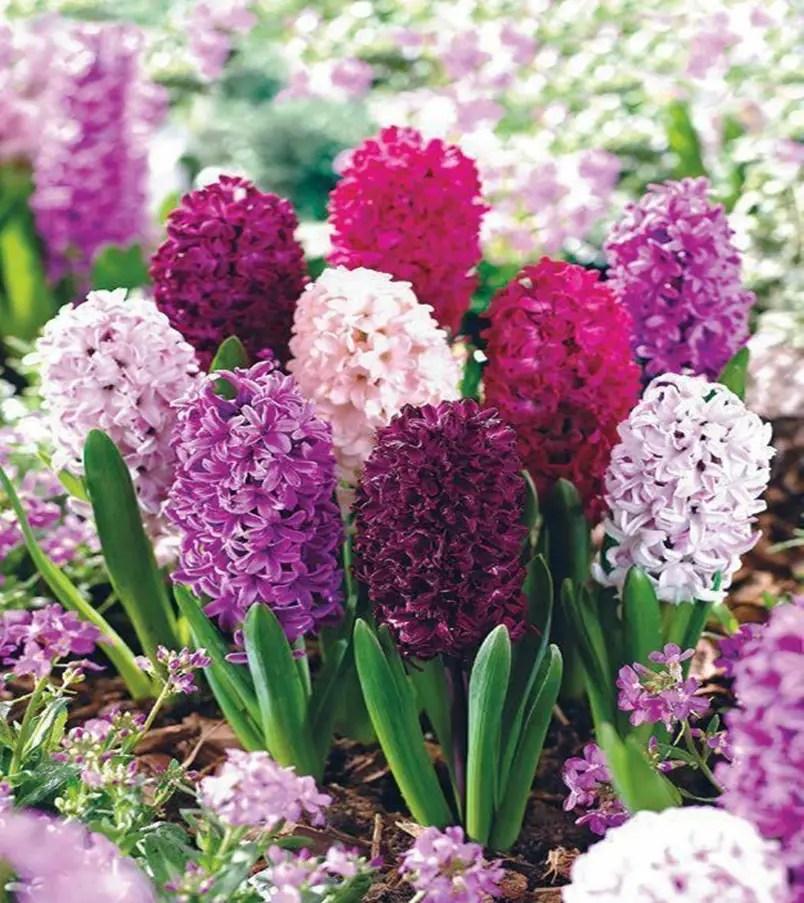 Fragrant flower 10